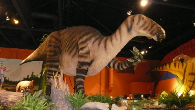 Dinosaur Isle museum review