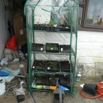The mini-greenhouse