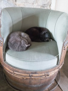 Cats on the barrel chair