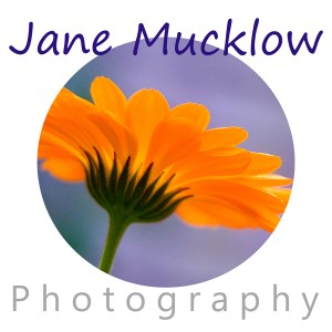 logo circle marigold text 8x8 FB