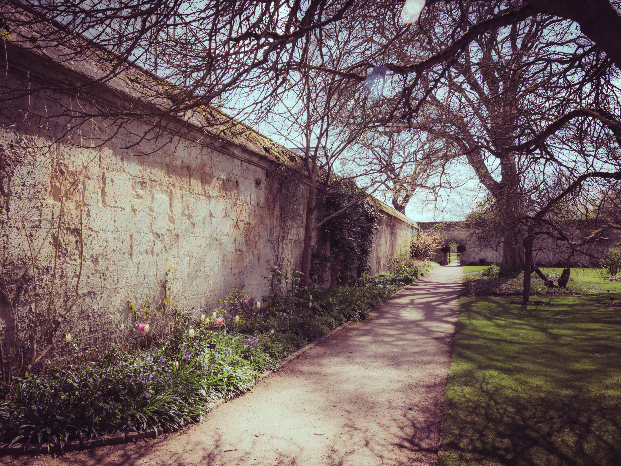 Oxford Botanic Gardens – The story of the photographs