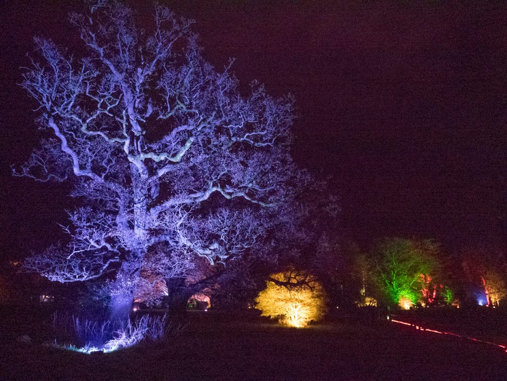 Review of Westonbirt Arboretum Enchanted Christmas