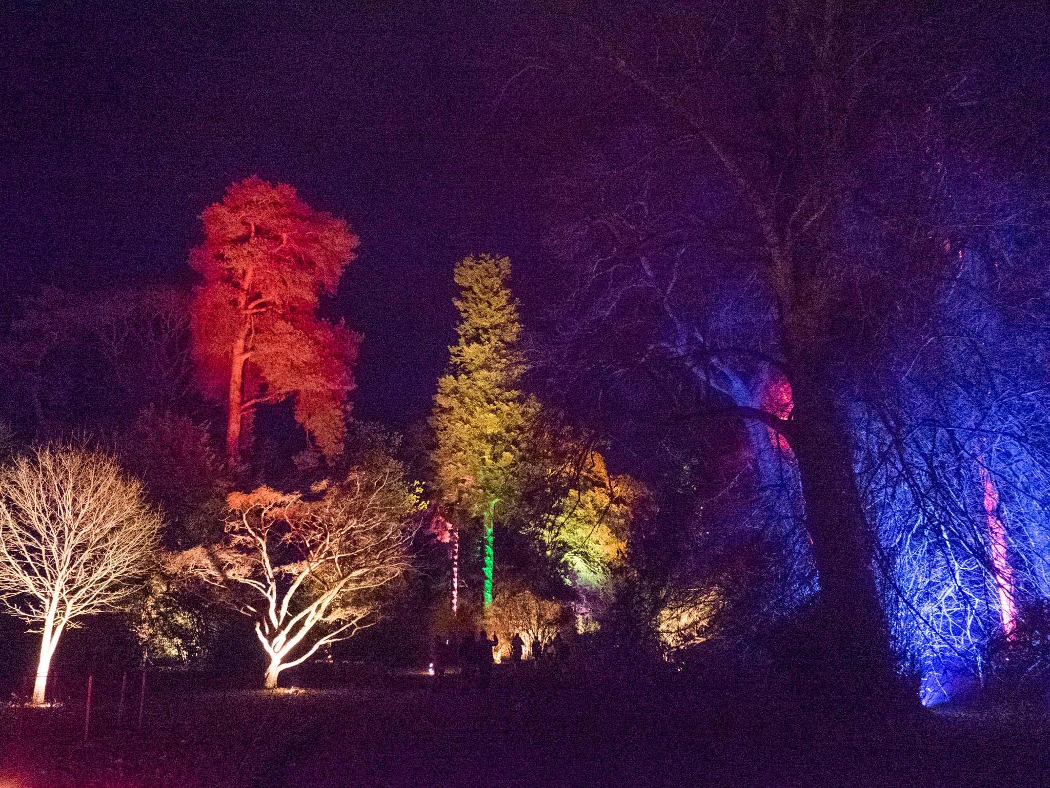 Where to go for a unique enchanted Christmas experience – a review of Westonbirt Arboretum