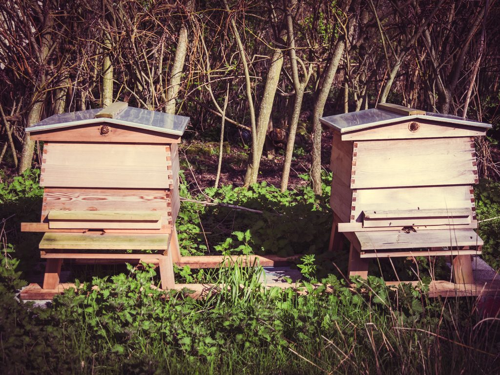 Beehives at Glastonbury Festival