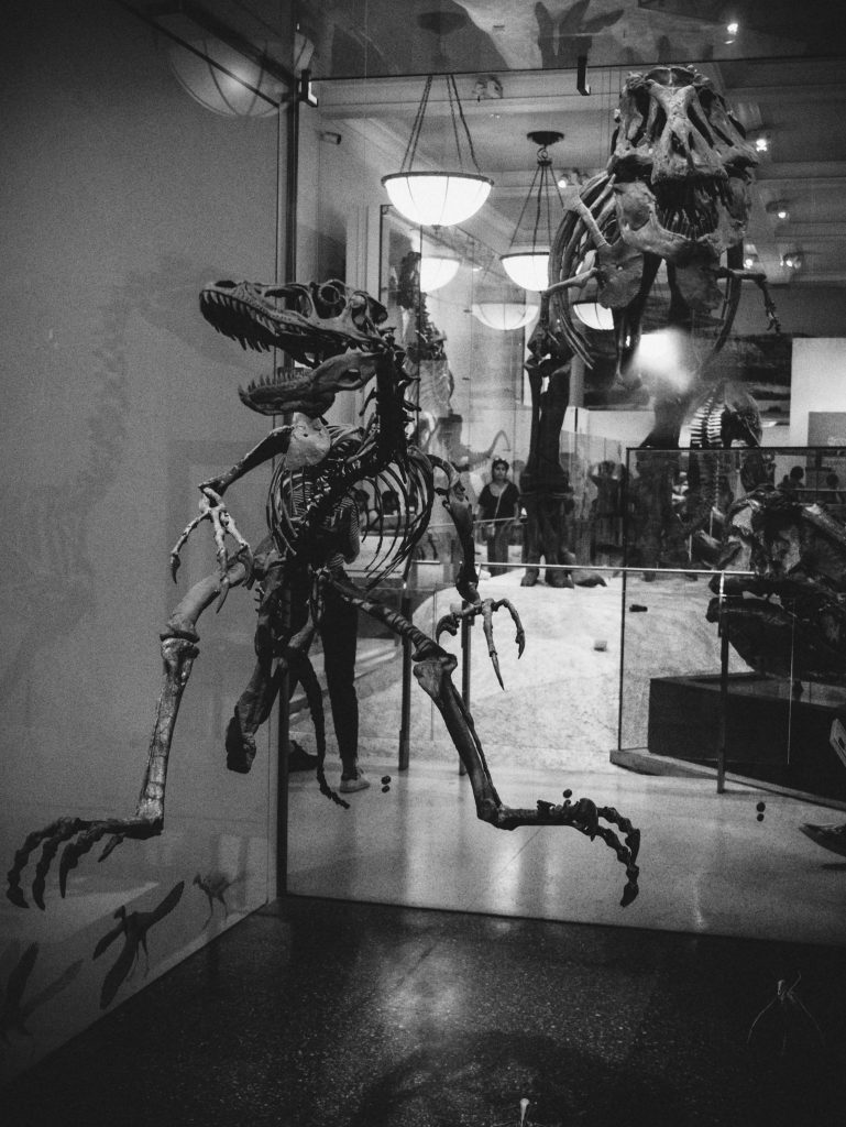Dinosaurs at the New York Natural History Museum