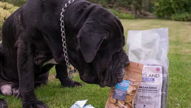 mail order dog food review