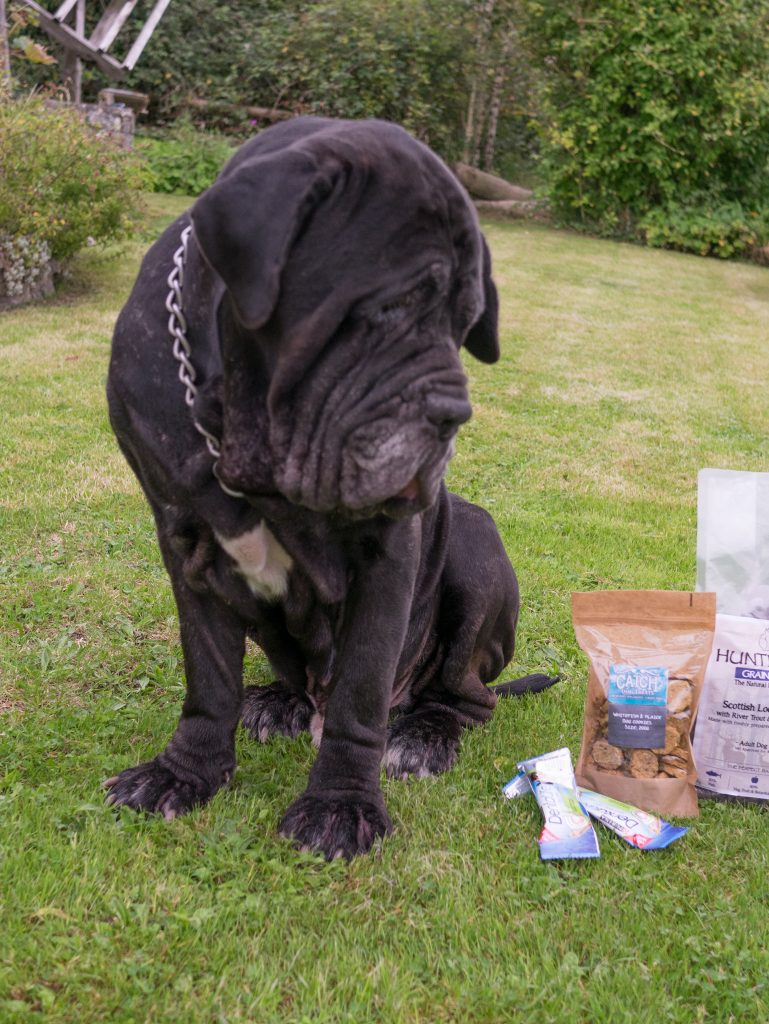 online dog food review