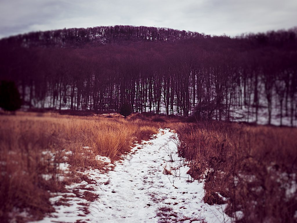 Harriman State park in winter