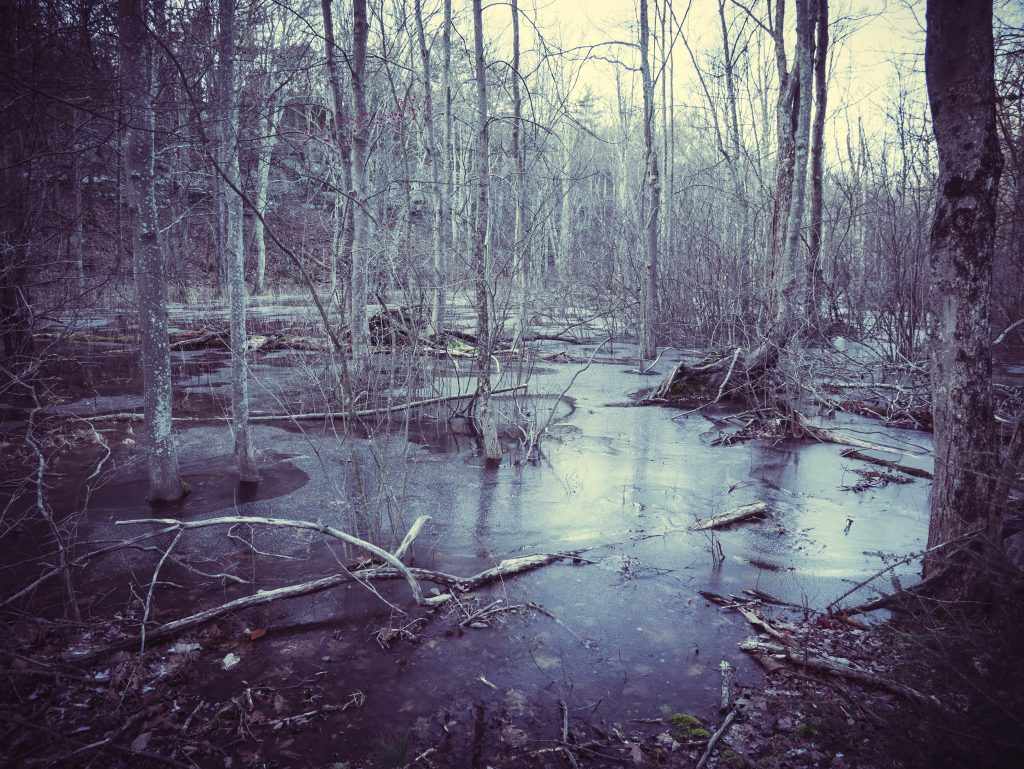 Spooky landscape photography