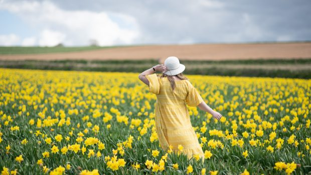 Over 40 fashion blogger in a yellow summer dress in a field of daffodils