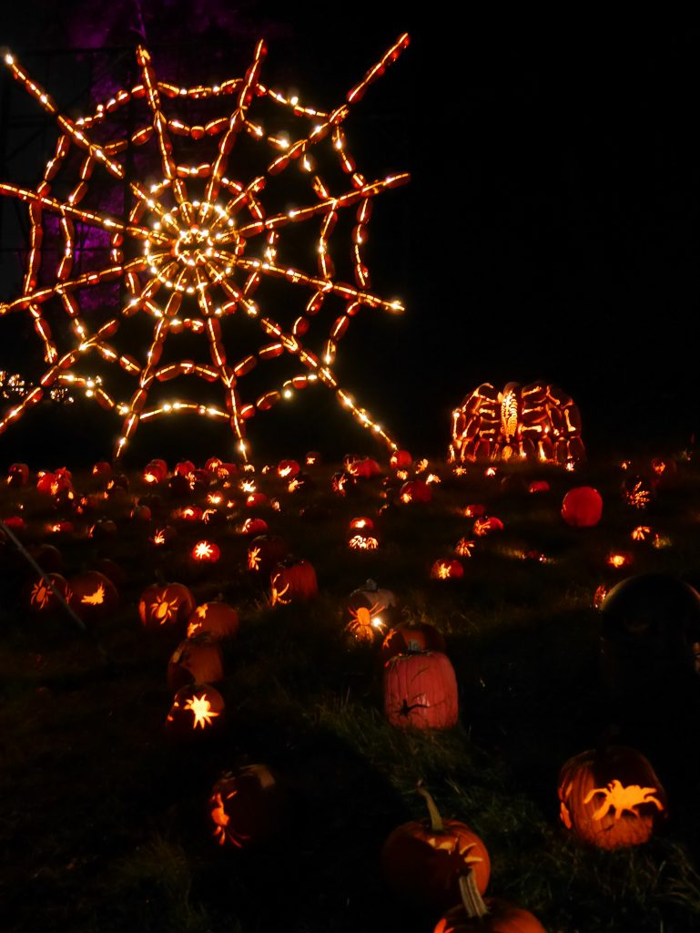 Pumpkins at The Blaze