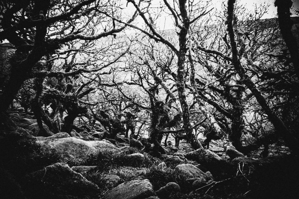 Spooky Wistman's Woods