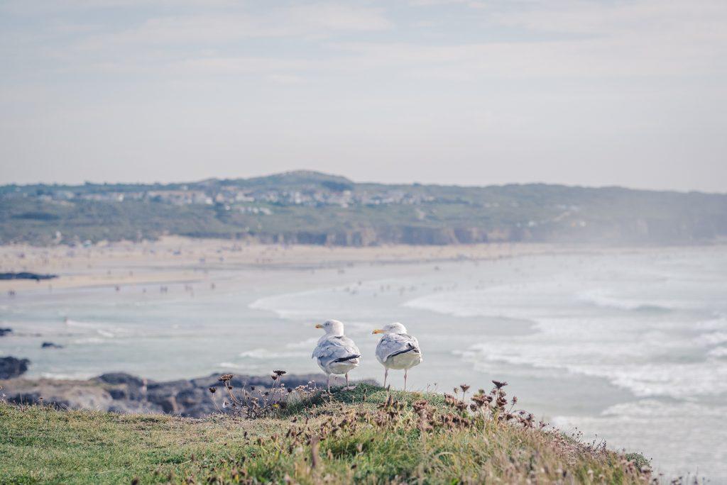 Seagulls at Godrevy beach
