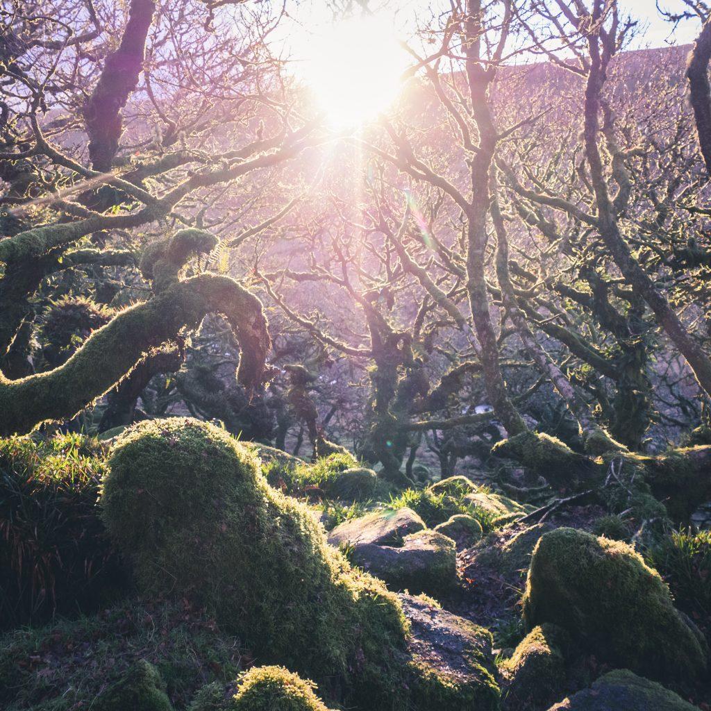 Magical Wistman's Wood in Devon
