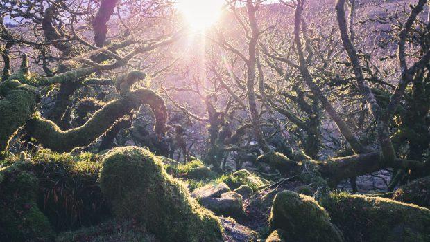 Photo of Wistman's Wood