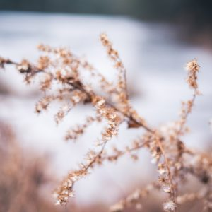 beautiful dead plant