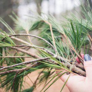 holding pine needles